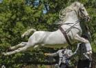 Los caballos españoles danzan en el sur del mundo