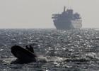 Turquía e Israel normalizan sus relaciones tras la flotilla de Gaza