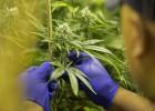 Seis de cada 10 jóvenes españoles, a favor de la legalización del cannabis