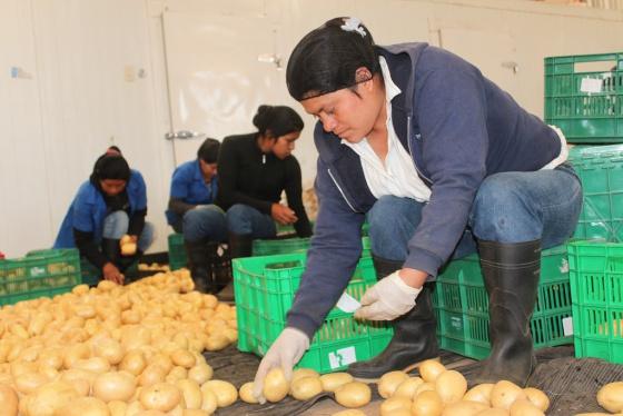 Mujeres trabajando en una planta de procesamiento de papas