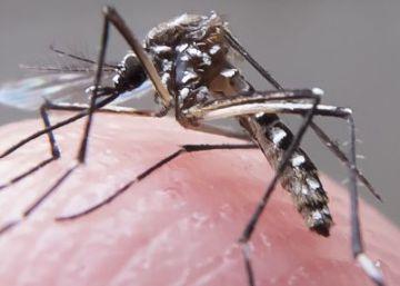 Ecuador registra los primeros casos del virus zika