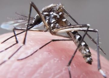 Colombia desaconseja a las mujeres quedarse embarazadas por el zika
