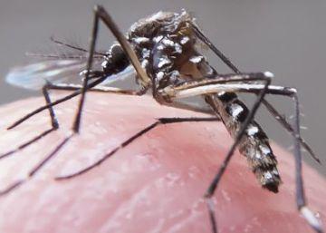 La microcefalia fetal por el virus zika aumenta en Brasil