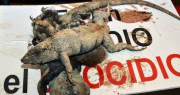 La imagen de unas igualas publicada por los vecinos en la página de Salvemos el manglar Tajamar.