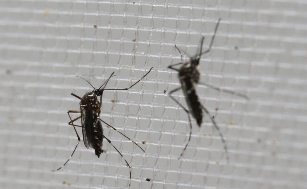 En Colombia hay más de 25.000 personas infectadas con el virus del zika.