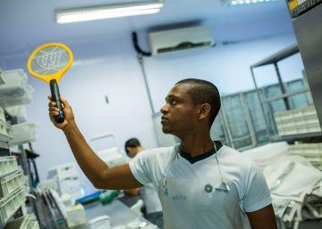 La OMS sugiere a las embarazadas posponer sus viajes a zonas con zika