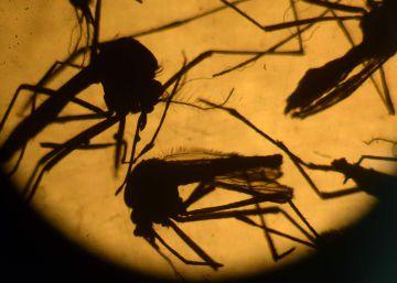 Un nuevo estudio sugiere que el virus del Zika puede atravesar la placenta