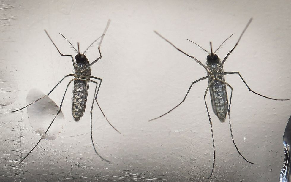 EUA avaliam 14 novos casos de possível transmissão sexual do zika