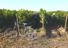 Bicicleta, el vino chileno que indigna a los franceses