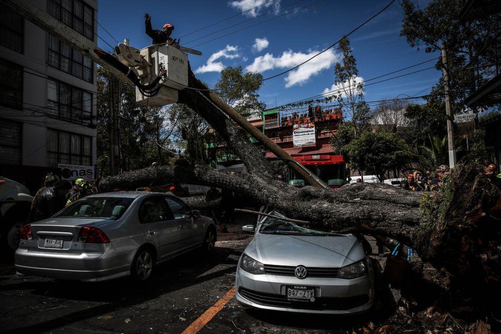 Varios árboles han caído en el DF a consecuencia del mal tiempo.