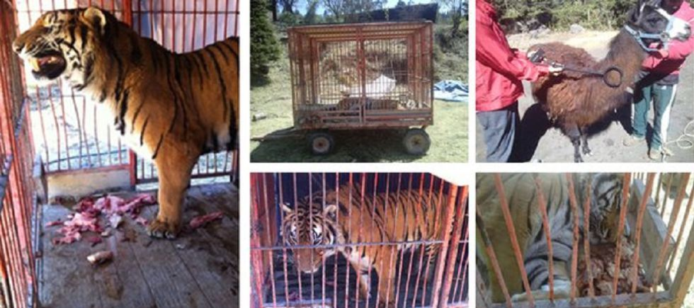 Los animales hallados en la Ciudad de México.