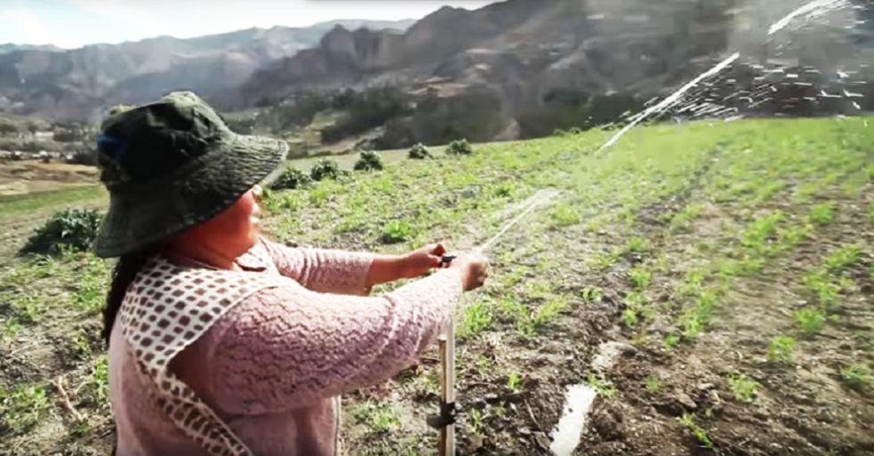 Cultivos alternativos podrían ser una opción para enfrentar a El Niño.