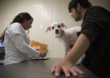 Sanidad pública para mascotas