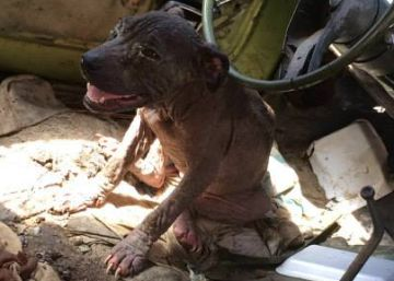 Is Mexico about to ban dog fighting for good?
