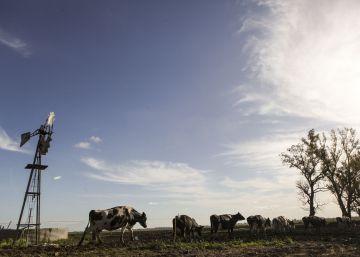 Argentina se aferra al campo para salir de la crisis