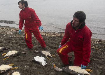 La marea roja paraliza una joya turística de Chile