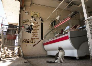 Los comercios argentinos ya venden verdura a plazos y cortes de carne más pequeños