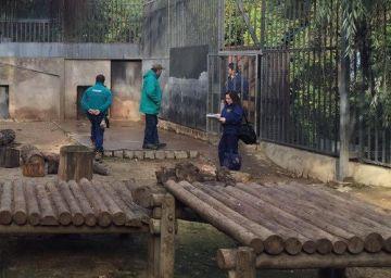 El personal del Zoo de Chile mata a dos leones para salvar a un hombre