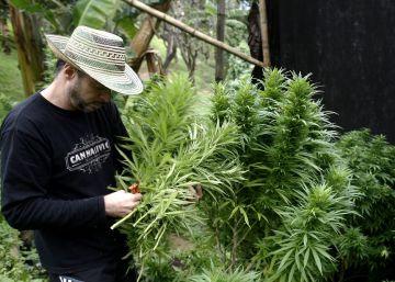 Colombia avanza en la legalización de la marihuana medicinal