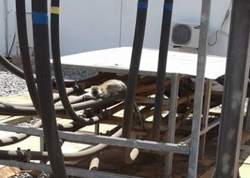 Un mono deja sin luz a toda Kenia