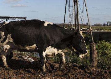 El campo argentino se reactiva en los primeros seis meses de Macri