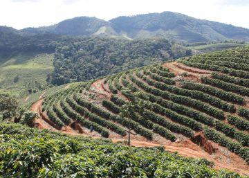 Los riesgos que afronta Brasil para combatir el hambre en el mundo