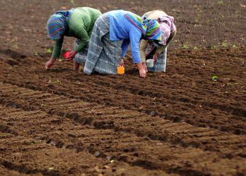 Latinoamérica da un paso al frente contra la deforestación