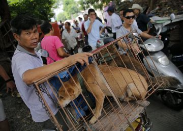 Tensión antes del comienzo del mayor festival de carne de perro en China