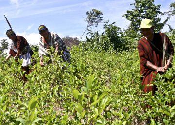 Aumenta el cultivo de coca en áreas protegidas de Perú