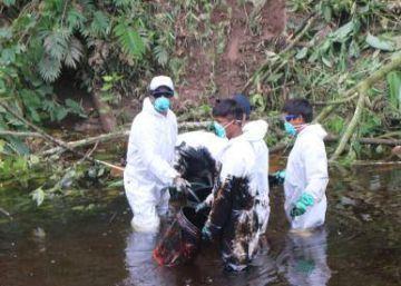 Quinto vazamento de petróleo do ano pinta de preto a Amazônia peruana