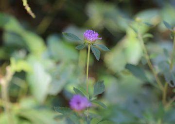 Un plan para salvar la casa de la stevia y la yerba mate