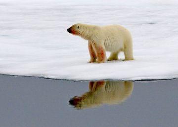 Diez osos polares cercan a científicos rusos en la remota isla ártica de Troynoy