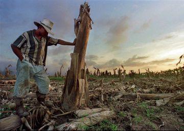 Campo de árboles de banano destruido después del paso del huracán Mitch, en el valle de Sula (Honduras) en 1998.