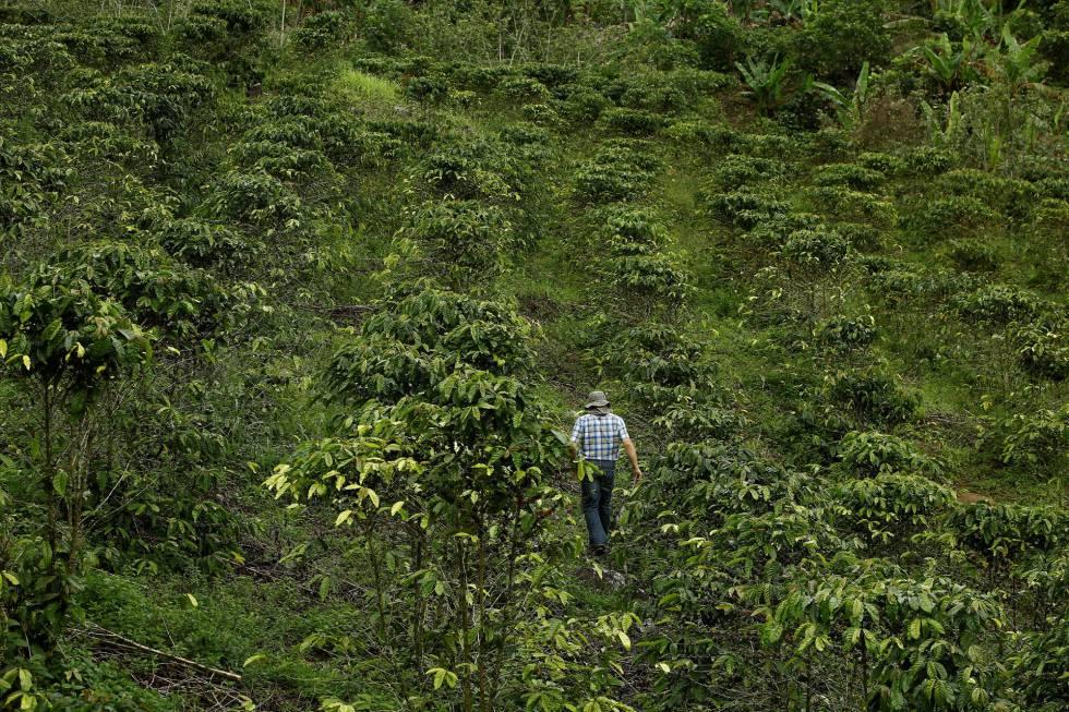 Selva costarricense