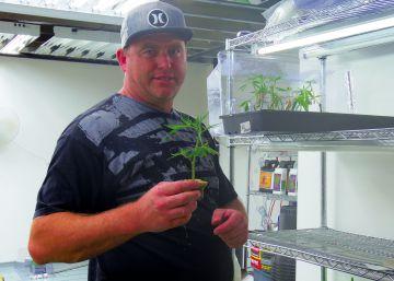 California, en vías de legalización del cannabis