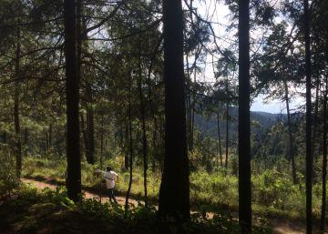 Así funciona la tala sustentable en el Nevado de Toluca