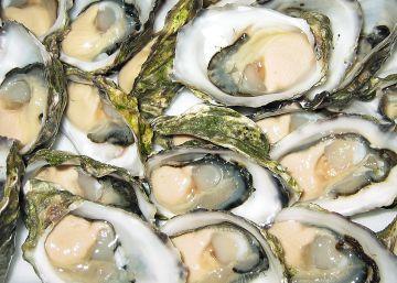 Las ostras dejan de ser un lujo en Portugal