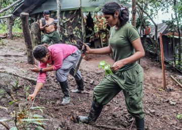 Las FARC se niegan a replegarse a las zonas de desarme si hay riesgo de captura