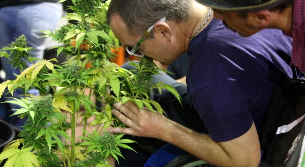 México marihuana medicinal