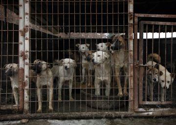 Corea del Sur acaba con la venta de carne de perro en uno de sus mercados más emblemáticos