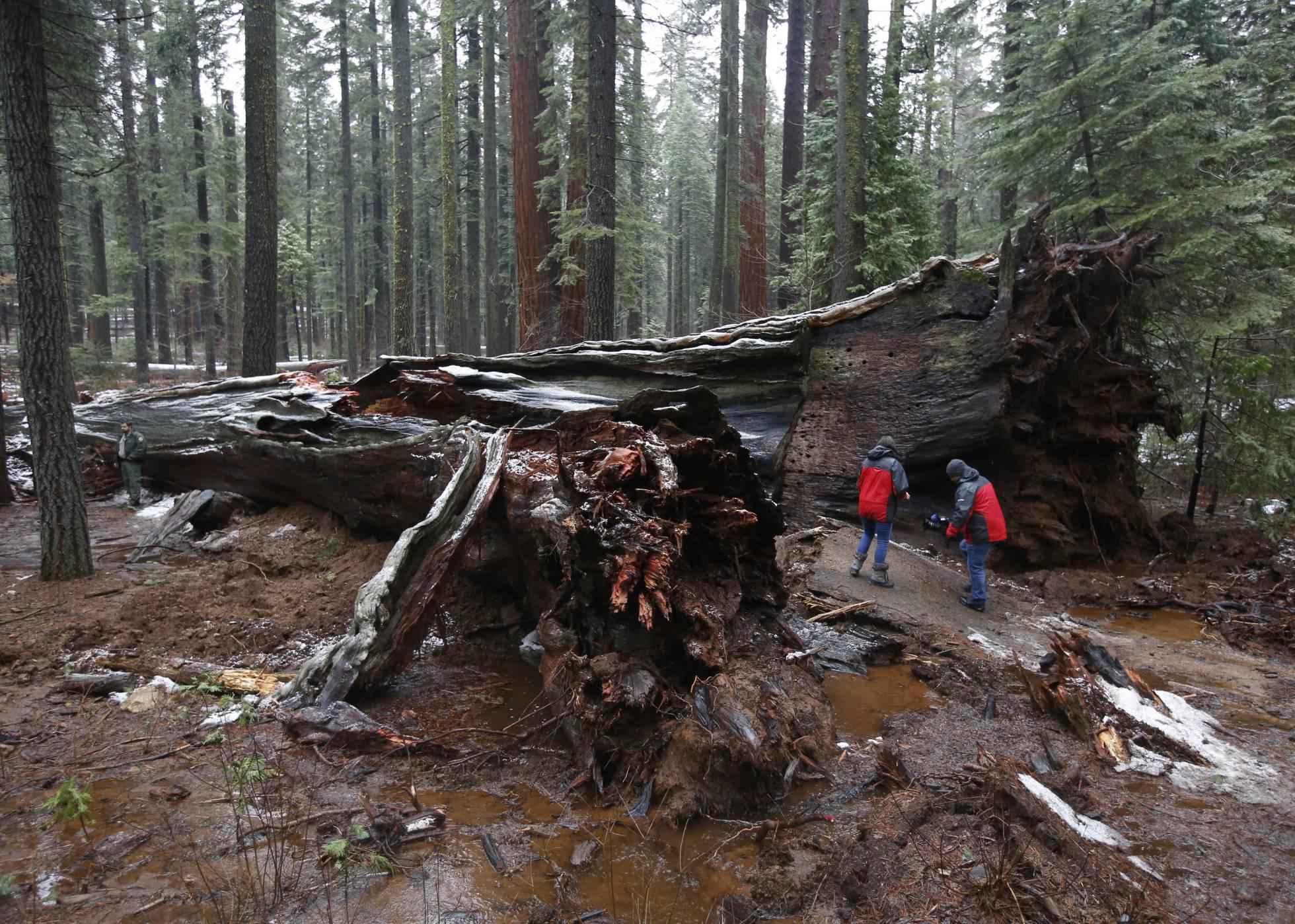 Adiós a un símbolo del turismo californiano