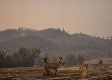 Chile enfrenta una crisis por los incendios forestales