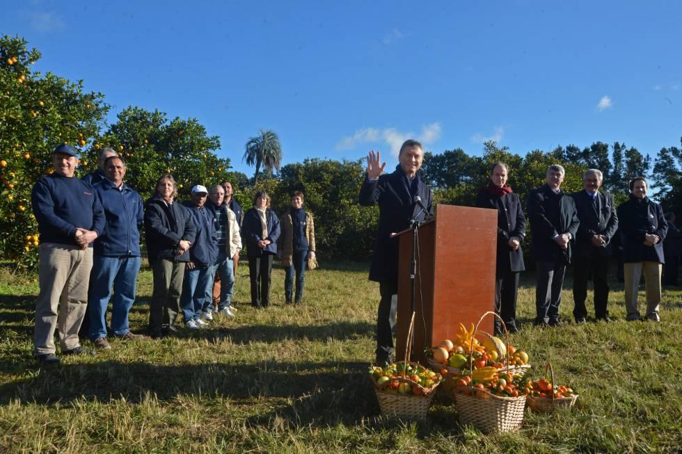 Mauricio Macri, en una plantación de cítricos en Concordia.