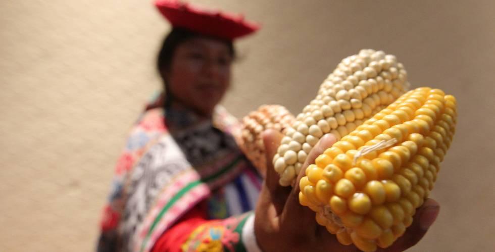 Protesta contra el maíz transgénico.