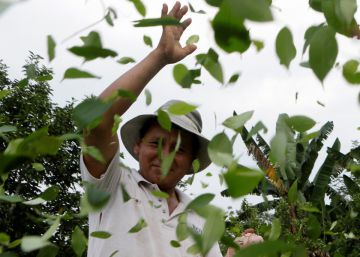 Bolivia doubles amount of land authorized to grow coca plant