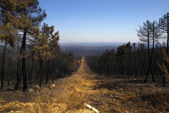 Vista desde un cortafuegos en la sierra de Teleno (León), tras el incendio que ha devorado 10.000 hectáreas. / CARLOS ROSILLO