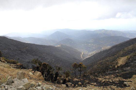 Zona quemada en Monda tras el incendio forestal de Sierra Negra, en  el municipio malagueño de Coín  (Málaga).