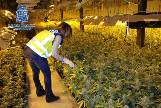 A marijuana plantation discovered in a Lleida warehouse in March.