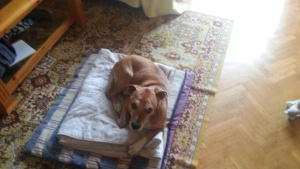 El perro Excálibur.