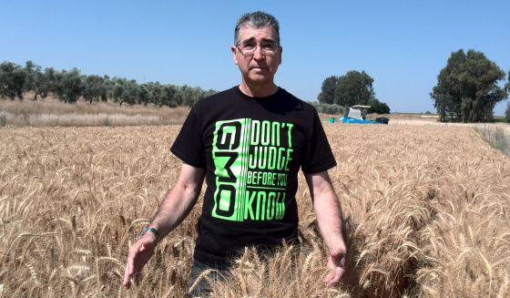 Francisco Barro, en un campo con trigo transgénico apto para celiacos.